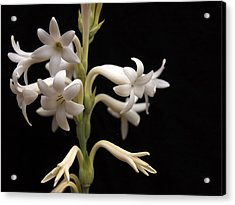 Tuberose Acrylic Print by Charles Ables