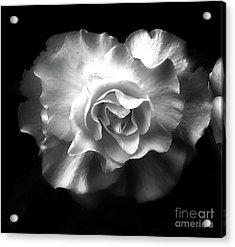 Acrylic Print featuring the photograph Tuberous Begoonia by Ann Jacobson