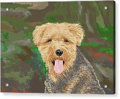 Tucker The Welsh Terror Acrylic Print by Carole Boyd