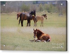 Acrylic Print featuring the photograph Tuckered Out by Benanne Stiens