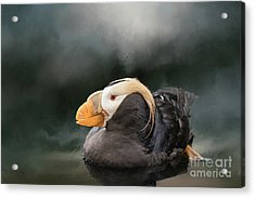 Acrylic Print featuring the photograph Tufted Puffin by Eva Lechner