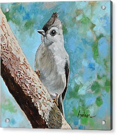 Tufted Titmouse #1 Acrylic Print by Amber Foote