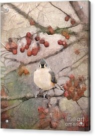 Tufted Titmouse Acrylic Print by Betty LaRue