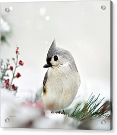 Tufted Titmouse Square Acrylic Print by Christina Rollo