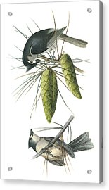 Tufted Titmoust Acrylic Print by John James Audubon