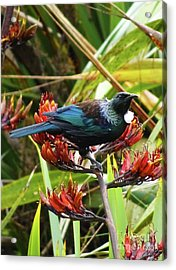Tui In Flax Acrylic Print by Angela DeFrias