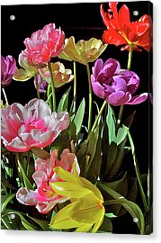 Acrylic Print featuring the photograph Tulip 8 by Pamela Cooper