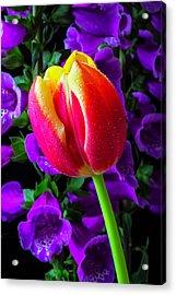 Tulip And Foxglove Acrylic Print