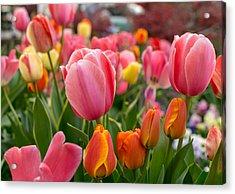 Tulip Bed Acrylic Print