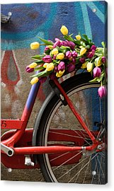 Tulip Bike Acrylic Print by Phyllis Peterson