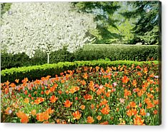 Acrylic Print featuring the photograph Tulip Cafe by Diana Angstadt