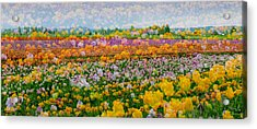 Acrylic Print featuring the photograph Tulip Dreams by Tom Vaughan