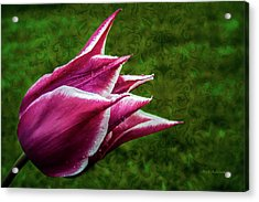 Tulip Fantastic Acrylic Print by Mick Anderson