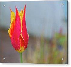 Tulip Fire Acrylic Print