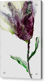 Tulip For Canada Day Acrylic Print