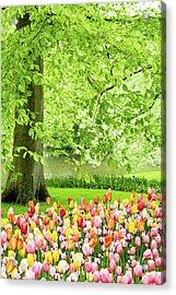 Tulip Garden - Amsterdam Acrylic Print