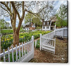 Tulip Garden Colonial Williamsburg  Acrylic Print