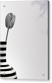 Tulip Gray Acrylic Print by Mark Rogan