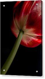 Tulip In Window Light Acrylic Print