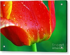 Acrylic Print featuring the photograph Tulip by Lila Fisher-Wenzel