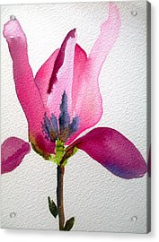 Tulip Magnolia Acrylic Print by Sacha Grossel