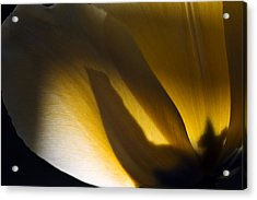 Tulip Messenger Acrylic Print by Shawn Young
