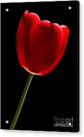 Acrylic Print featuring the photograph Red Tulip No. 2 By Flower Photographer David Perry Lawrence by David Perry Lawrence
