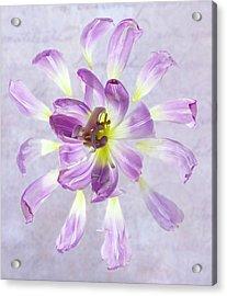 Tulip Patterns  Acrylic Print