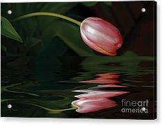 Tulip Reflections Acrylic Print