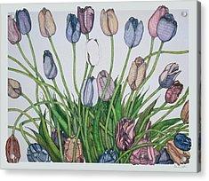Tulip Serenade  Acrylic Print