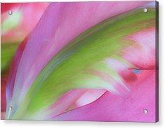 Tulip Study Acrylic Print