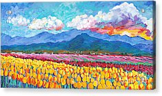 Tulip Sunrise Acrylic Print