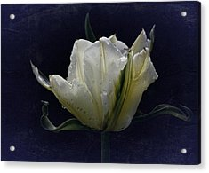 Tulip Tears Acrylic Print by Richard Cummings