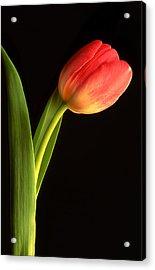 Tulip  Acrylic Print by Tony Ramos