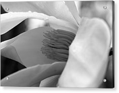 Tulip Tree Bloom Acrylic Print by Scott Gould