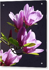 Tulip Tree Acrylic Print by Elorian Landers