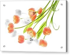 A Creative Presentation Of A Bouquet Of Tulips. Acrylic Print
