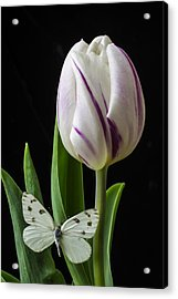 Tulip With White Butterfly Acrylic Print