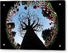 Tulip Wonderland L550 Acrylic Print by Yoshiki Nakamura