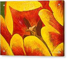 Tulipan Anaranjado Acrylic Print by Karla Kernz
