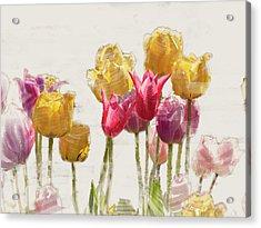 Tulipe Acrylic Print