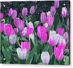 Tulips 327dp Acrylic Print by Brian Gryphon