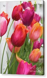 Tulips Acrylic Print by A New Focus Photography