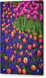 Tulips And Blue Hyacinths Acrylic Print