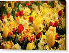 Tulips And Daffodils Acrylic Print by Tamyra Ayles