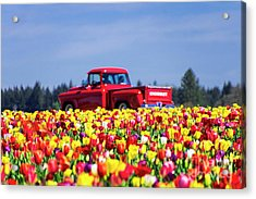 Tulips And Red Chevy Truck Acrylic Print