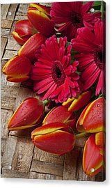 Tulips And Red Daisies  Acrylic Print by Garry Gay