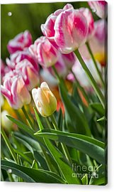 Acrylic Print featuring the photograph Tulips by Angela DeFrias
