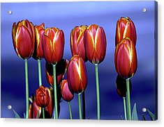 Tulips At Attention Acrylic Print