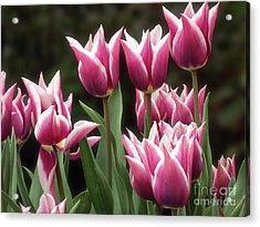 Tulips Bed  Acrylic Print